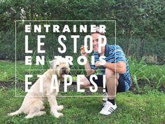 Entraîner le STOP pour interrompre un comportement non désiré chez le chien! - YouTube