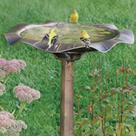 .luv me some golden finches