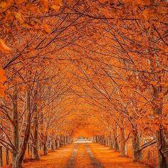 Armidale, New England, NSW