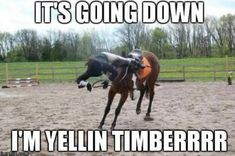 Cant say I havent been there once or twice! - Horses Funny - Funny Horse Meme - - Cant say I havent been there once or twice! The post Cant say I havent been there once or twice! appeared first on Gag Dad. Funny Horse Memes, Funny Horse Pictures, Funny Horses, Cute Horses, Funny Animal Memes, Horse Love, Beautiful Horses, Funny Animals, Funny Quotes