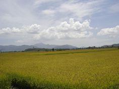 Phu Yen, Viet Nam