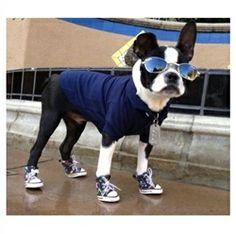 30+ Dogs Wearing Sneakers ideas   dogs