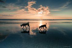 Perros en el mar de Masachapa
