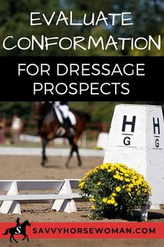 Dressage is a demanding sport for horses and riders. You want to pick a dressage prospect with the intelligence, stamina and conformation to succeed in the sport. Dressage Horses, Equestrian, Sport, Group, Deporte, Horseback Riding, Sports, Show Jumping, Equestrian Problems
