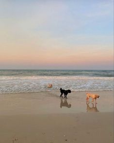 Beach Aesthetic, Summer Aesthetic, Travel Aesthetic, Flower Aesthetic, Summer Feeling, Summer Vibes, Summer Dream, Aesthetic Pictures, Surfing