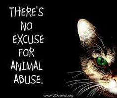 No excuse for animal abuse Beautiful Creatures, Animals Beautiful, Small Acts Of Kindness, Cat Whiskers, Stop Animal Cruelty, Cat Quotes, Life Quotes, Puppy Mills, Animal Rights