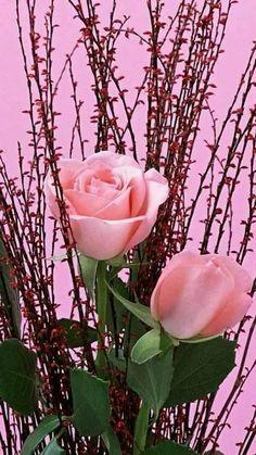 The photo - Modern Beautiful Rose Flowers, Beautiful Flower Arrangements, Pretty Roses, Exotic Flowers, Amazing Flowers, Beautiful Love Pictures, Beautiful Little Girls, Good Morning Nature, Garden Fountains