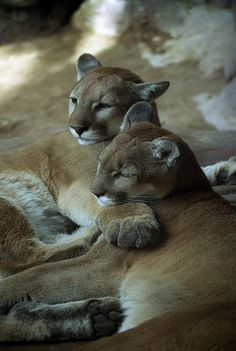 the size of their paws . . . awesome.