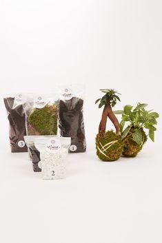 Kit terrarium humide Ficus et Fittonia vert - Terrarium humide Green Factory