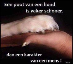 Puppy Quotes, Animal Quotes, Jokes Quotes, Life Quotes, Best Frends, Beautiful Lyrics, Dutch Quotes, Truth Hurts, Humor