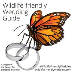 """Weddings are a multi-billion-dollar-a-year industry in the United States. With all of the associated costs — from travel and food to flowers and party favors — the """"big day"""" often comes at a big expense to wildlife and the environment.  This guide lays out many of the ways you can make your wedding wildlife friendly. Wedding Costs, Big Day, Party Favors, Wildlife, Environment, Reuse, Flowers, Opportunity, Choices"""