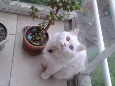 Mi Mickey en su balcon..