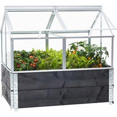 Raised Vegetable Garden Beds Can Be A Great Gardening Option – Handy Garden Wizard Landscaping With Rocks, Garden Landscaping, Balcony Gardening, Small Greenhouse, Fall Planters, Colorful Plants, Foliage Plants, Gnome Garden, Edible Garden