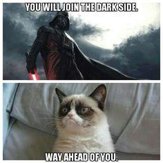 Grumpy cat star wars death vader
