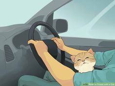 how to travel with kitties--this was really helpful