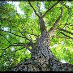 【to.shi.7891】さんのInstagramをピンしています。 《近所の公園の木  僕が19歳の頃に撮った写真です(^_^) 知識も技術も機材もないけど、構図だけは考えて撮った写真。今だったらもっと広角なレンズでよりダイナミックに撮るだろうな。  #forest #leave #leaf #tree #自然 #nature #nature_good #nature_sultans #natures_best_shots #beautiful #風景 #景色 #森林 #緑 #近所 #landscape #photograph #green #Hokkaido #写真 #写真好キナ人ト繋ガリタイ #写真撮ッテル人ト繋ガリタイ #陽射し #photographer》