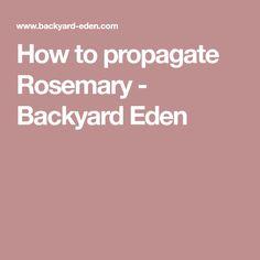 How to propagate Rosemary - Backyard Eden