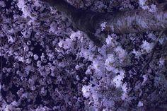 Keita's Photography : 画像