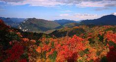 Guangwushan Mountain,Maple dye mountains