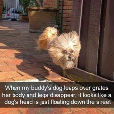 Enjoying with animals is a very pleasant feel overall. If you're addicted to your cat and your cat will do something cute or funny, it'll make you feel laugh for sure. Here are 24 hilarious cats laughing so hard for cat lovers. Funny Shit, Funny Dog Memes, Funny Animal Memes, Cute Funny Animals, Funny Animal Pictures, You Funny, Funny Cute, Funny Dogs, Animal Quotes