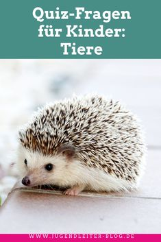 Quiz questions for children about animals. Ideal for family, group lessons, kindergarten, school and extracurricular Animal Quiz, Animal 2, Animals For Kids, Animals And Pets, Cute Animals, Hedgehog Pet, Nocturnal Animals, Fish Feed, Cute Games