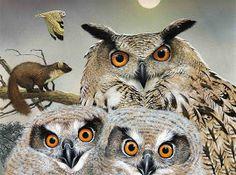 Marjolein Bastin - Great Horned Owl family