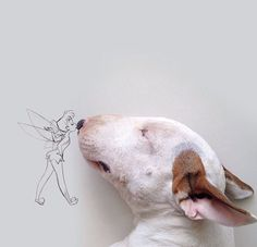 Tinker bell & English Bull Terrier