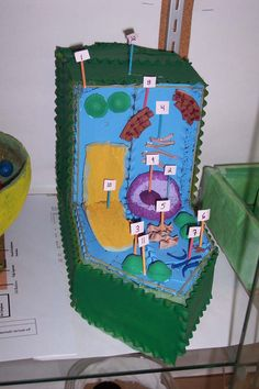 3d Plant Cell Project
