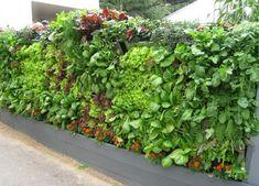 muro con jardineras verticales