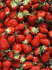 Strawberry Crop Guide: General Information