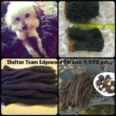 Shelton Spinzilla yarns #TeamEdgewood