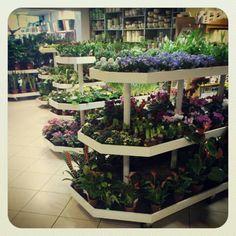 #plants #kwiaciarnia_szafran