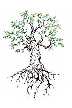 Деревья – 65 фотографий