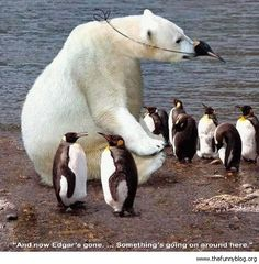 funny real bears | Funny-Mill-Funny-Polar-Bear-Collection-pic-40.jpg