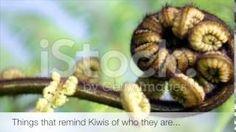 Showcasing Fresh Kiwiana Stock Photography… From Iconic Kiwiana and Maoritanga to Aotearoa's Diverse Flora, Scenery and National Parks… And Everything In-bet. Kiwiana, New Zealand, Flora, National Parks, Scenery, Photography, Youtube, Photograph, Landscape