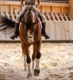 Peace ☮ Love ♡ Horses ♘