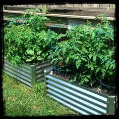 garden beds in a row
