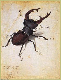 Acheter Tableau 'Cervus Lucanus' de Albrecht Durer - Achat d'une reproduction sur toile peinte à la main , Reproduction peinture, copie de tableau, reproduction d'oeuvres d'art sur toile