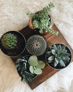 The Best Kind of Plant to Grow in Every Type of Apartment via @PureWow #apartmentgardening