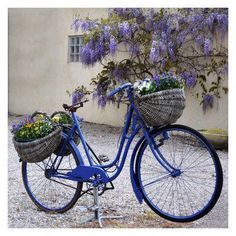West of the Wind Blue Bike Outdoor Canvas Wall Art - 79055-24