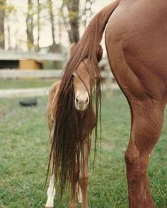 #Horses - young foal with his mum Peek a boo! I see you! http://www.justapoundbooks.com/products-page/hobbies/owning-and-caring-for-your-horse/