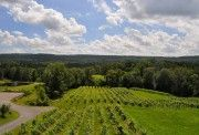 Six Mile Creek Vineyards, Ithaca, NY