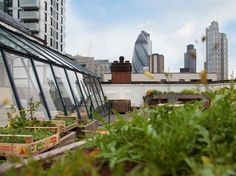 Culpeper Roof Garden - London, UK