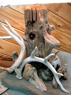 Did it a little different as my antlers were attached to skull Deer Horn Decorations Deer Hunting Decor, Deer Decor, Deer Antler Crafts, Antler Art, Deer Mounts, Shed Antlers, Lodge Decor, Barn Wood, Decoration