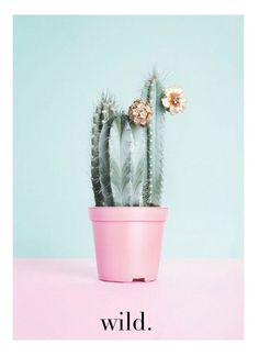 CACTUS :: urban outfitters-style wall art on Etsy