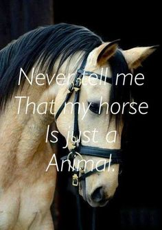 Basic Rules About Horseback Riding For Beginners - Horses Funny - Funny Horse Meme - - Horses are not just animals they are beautiful creatures! The post Basic Rules About Horseback Riding For Beginners appeared first on Gag Dad. Funny Horse Memes, Funny Horses, Cute Horses, Pretty Horses, Horse Love, Horse Girl, Funny Quotes, Equine Quotes, Equestrian Quotes
