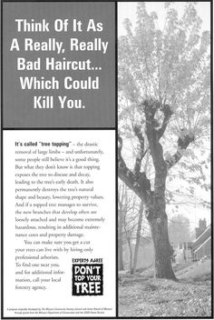 Killer haircut Hair Cuts, How To Remove, Plants, Trees, Haircuts, Tree Structure, Plant, Hair Style, Wood