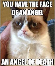 Grumpy Cat hates angels