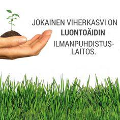Kasvit poistavat ilmasta haitallisia kemikaaleja, tuottavat raikasta happea ja terveellistä ilmankosteutta, sekä torjuvat mikrobeja. www.vihersisustuscreative.fi