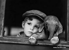 baby elephant, hauntingly beautiful photo